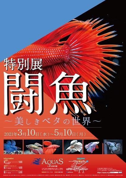 特別展 闘魚 ~美しきベタの世界~