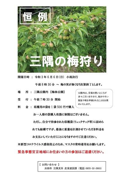 三隅公園(梅林)の梅狩り