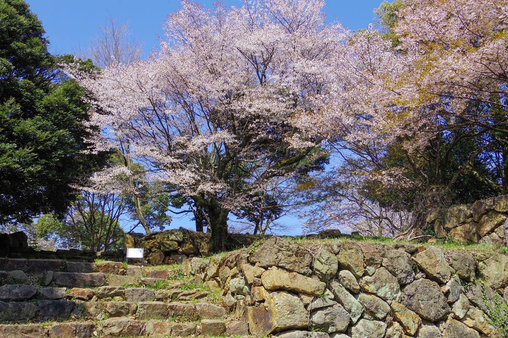 桜の名所として