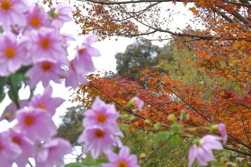 原田花咲園