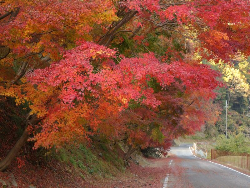 鍋石の紅葉
