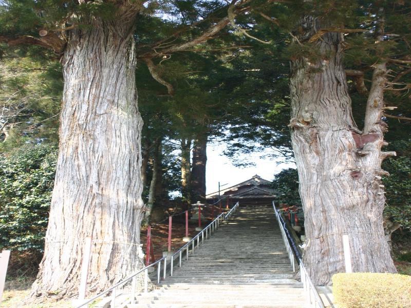 長安本郷の八幡宮並木杉