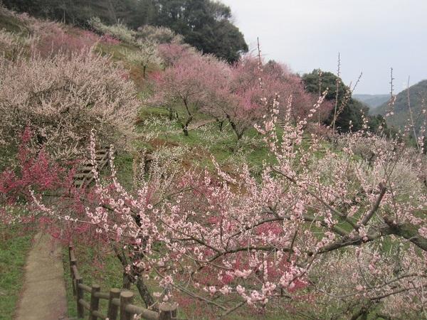 三隅梅林公園