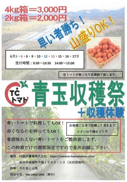 TCトマト青玉収穫祭+収穫体験